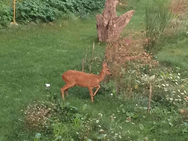 Culture de plantes Bio dans mon jardin guérisseur