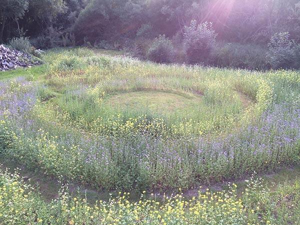 Mon jardin holistique en Bretagne à Ploemel dans le Morbihan